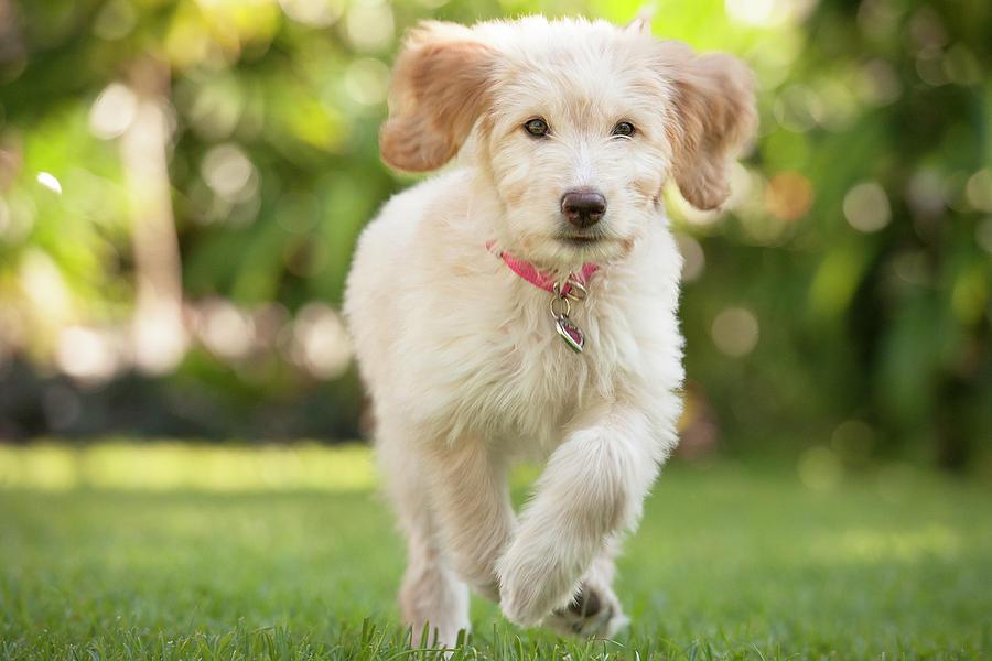 Puppy Running Through The Grass Photograph by Chris Stein