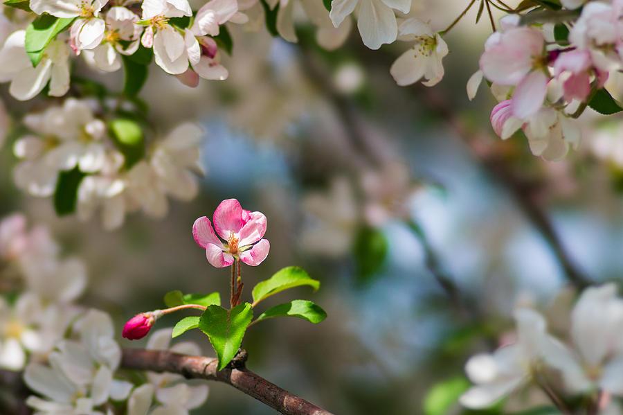Flower Photograph - Pure Beauty - Featured 3 by Alexander Senin