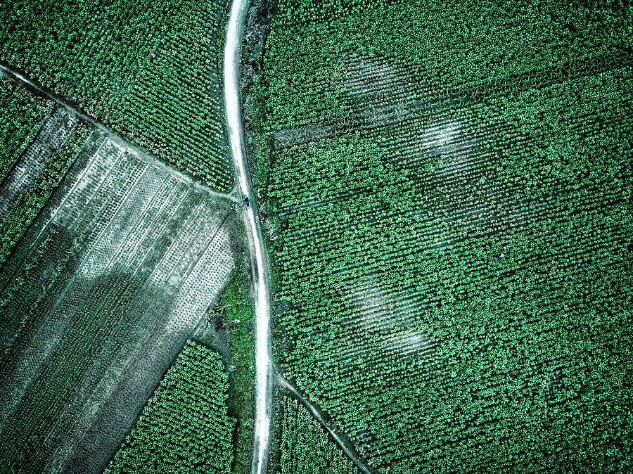 Green Photograph - Pure Green by Zhou Chengzhou