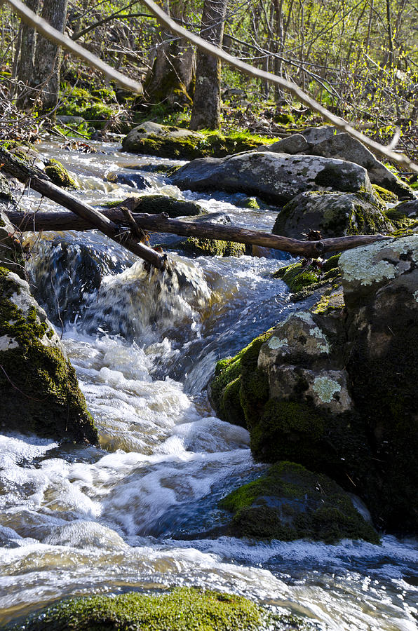 Pure Photograph - Pure Mountain Stream by Bill Cannon