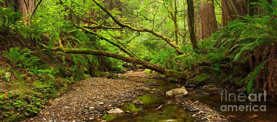 Purisima Creek Photograph - Purisima Creek by Matt Tilghman