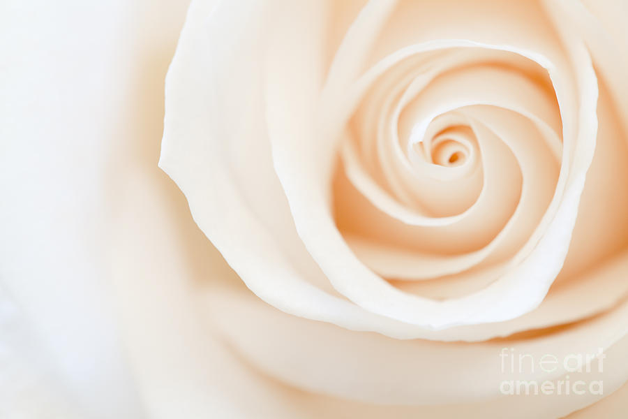 Floral Photograph - Purity by Lisa McStamp