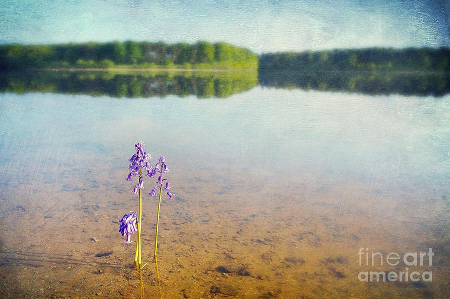 Bay Photograph - Purity by Svetlana Sewell
