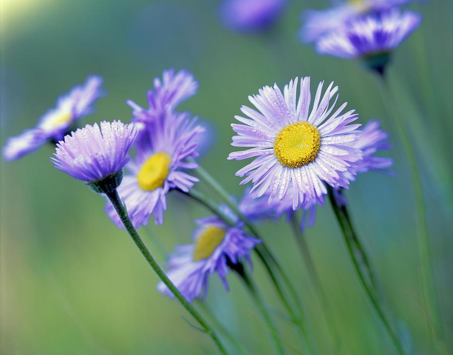 Flowers Photograph - Purple Affair by Tony Santo
