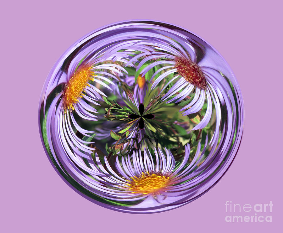 purple aster flower orb abstract photograph by darleen stry, Beautiful flower