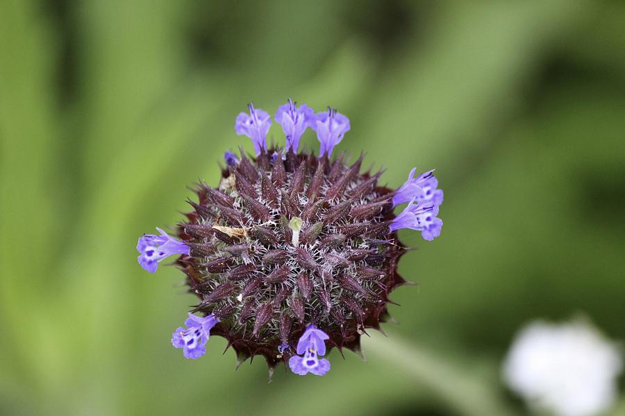 Nature Photograph - Purple Beauty by Luna Curran