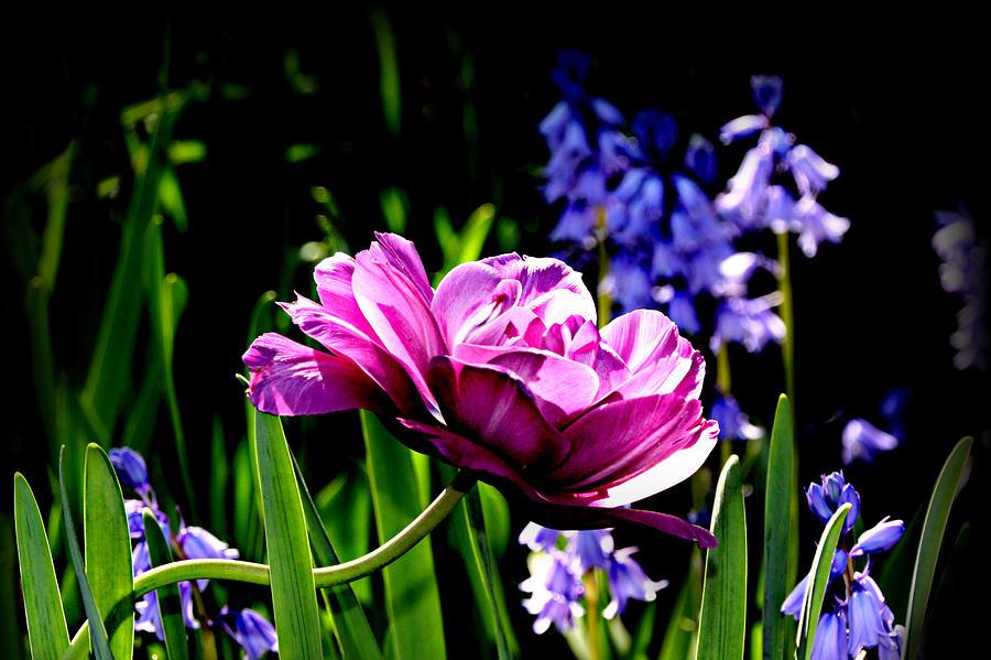 Purple Photograph - Purple Beauty by Tina Meador