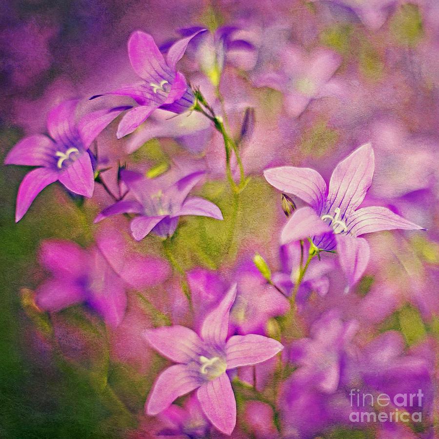 Purple Bell Flowers Square Digital Art By Izabela Kaminska
