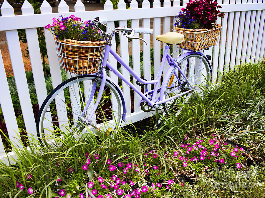 Bicycle Photograph - Purple Bicycle And Flowers by David Smith