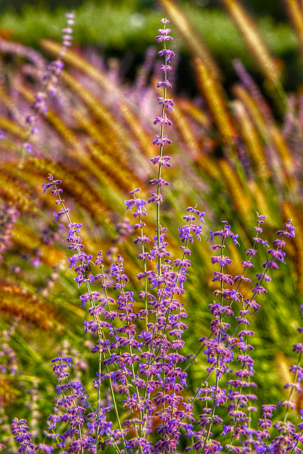 Blooms Photograph - Purple Blooms by Kathi Isserman