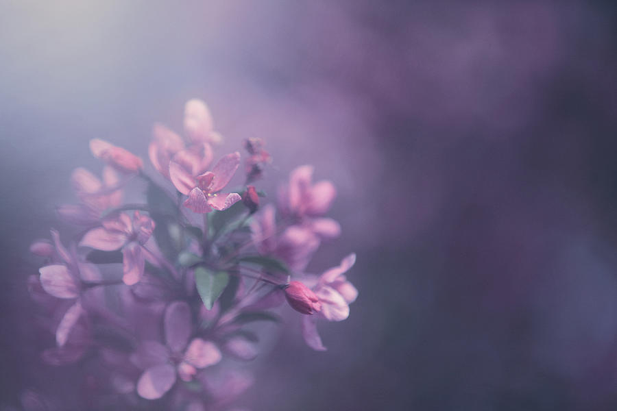 Purple Photograph - Purple by Carrie Ann Grippo-Pike
