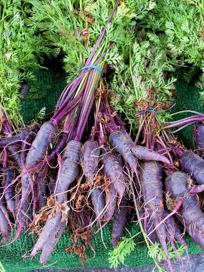 Purple Carrots At A Farmers Market Photograph by Bill Boch