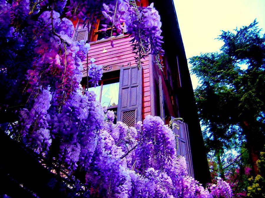 Purple Cheer by Zafer Gurel