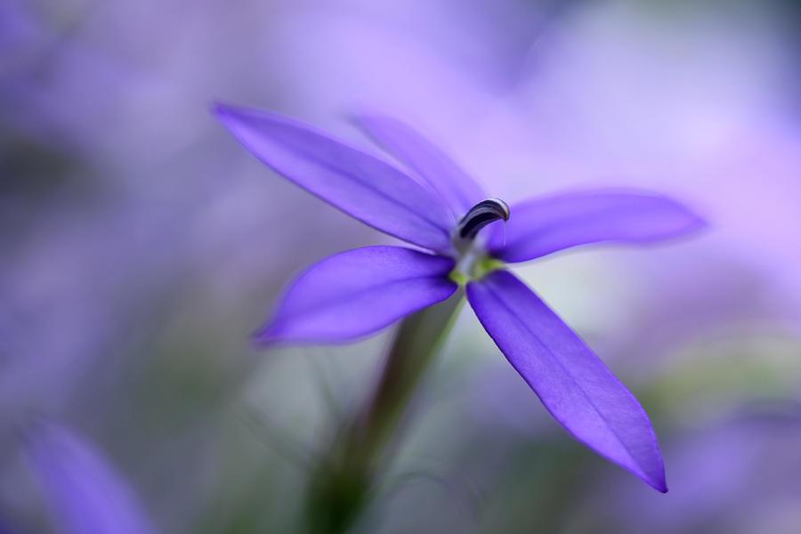 Nature Photograph - Purple Dreams by Annie Snel