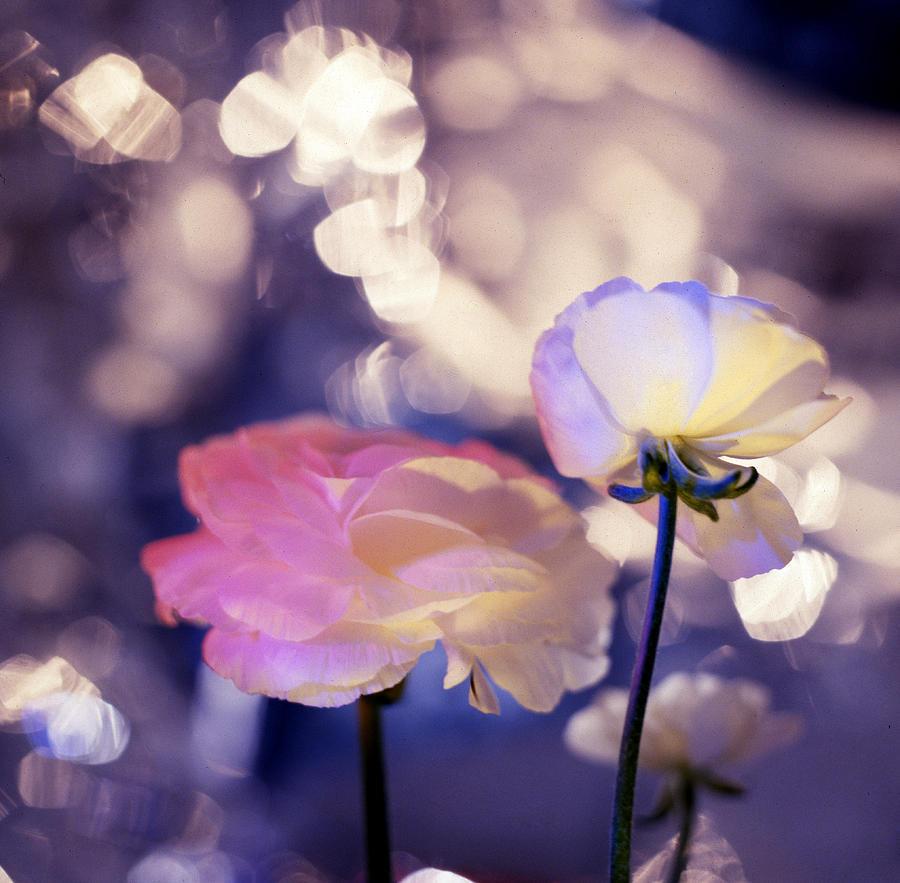 Botanical Photograph - Purple  by Etti PALITZ