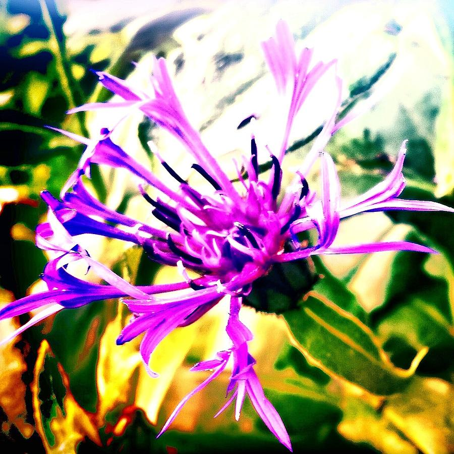 Purple Flower Photograph by J Roustie