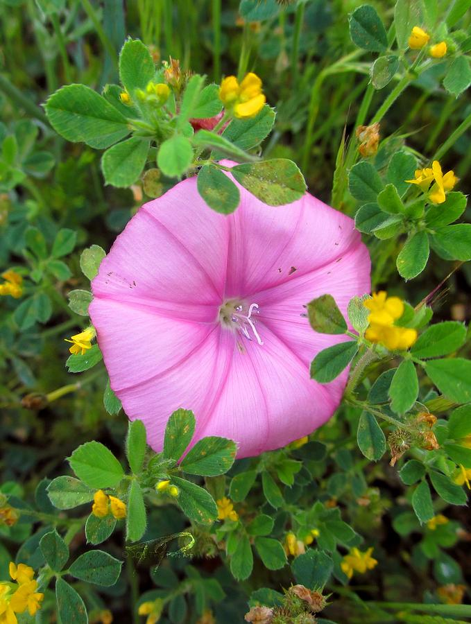 Nature Photograph - Purple Flower by Tinki Pinki Art