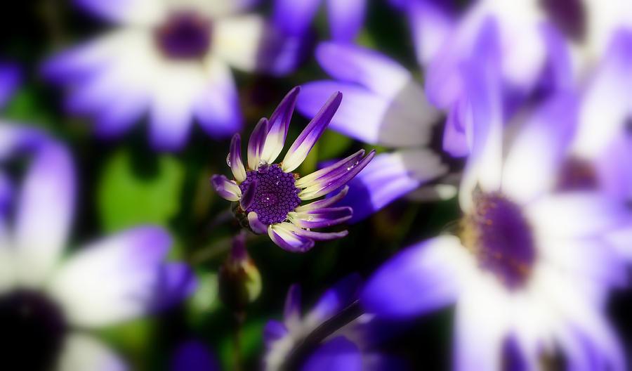 Purple Photograph - Purple Flowers by Barbara Walsh