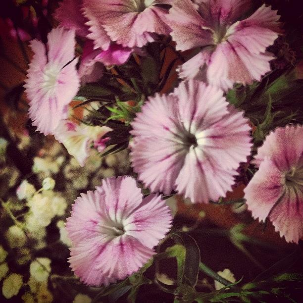 Style Photograph - #purple #flowers #ihavenoclue #pretty by Amber Campanaro