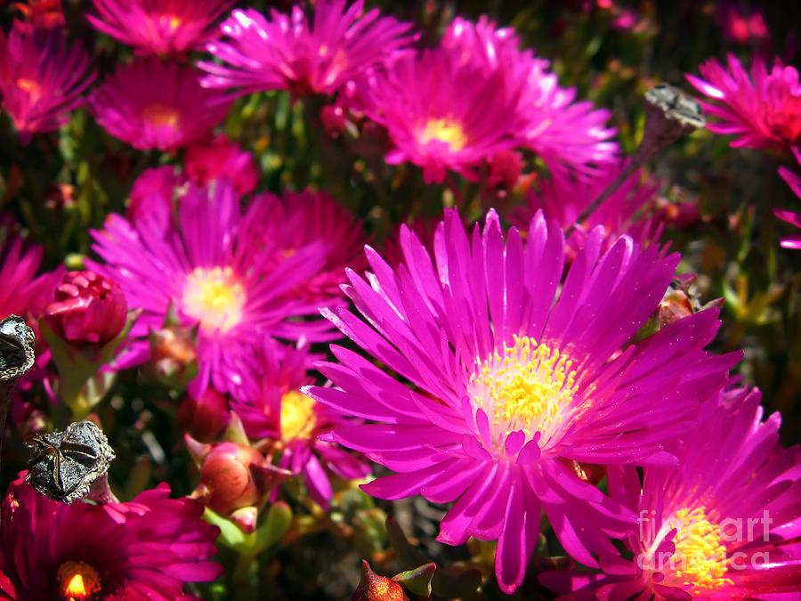 Flower Pyrography - Purple Flowers by Jelena Jovanovic