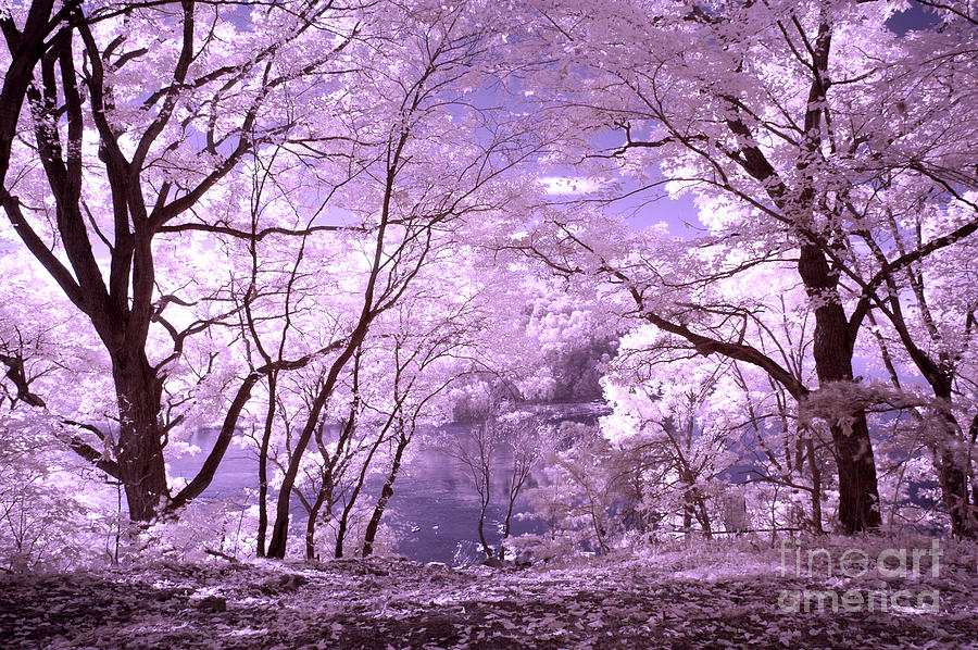 Purple Forest Photograph By Paul W Faust Impressions Of