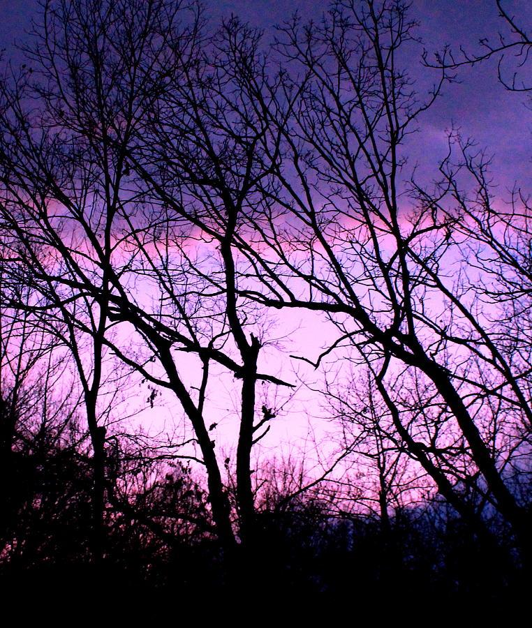 Trees Photograph - Purple Haze by Candice Trimble