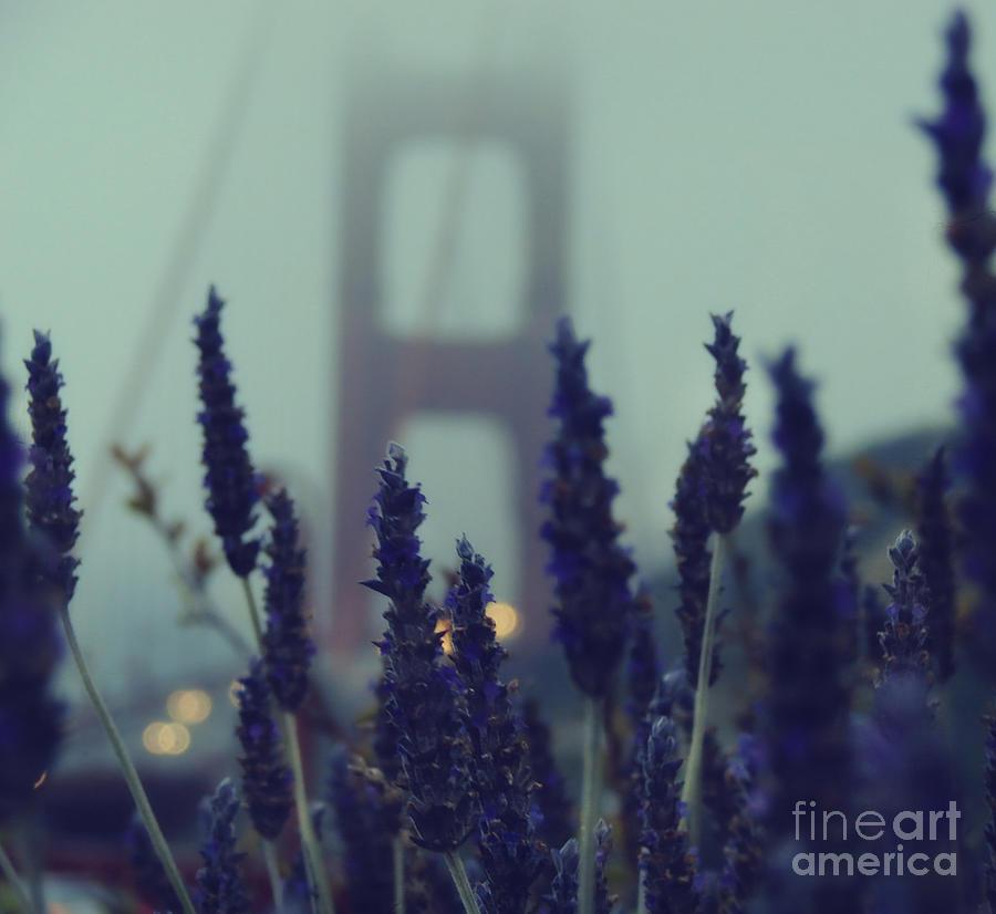 San Francisco Photograph - Purple Haze Daze by Jennifer Ramirez