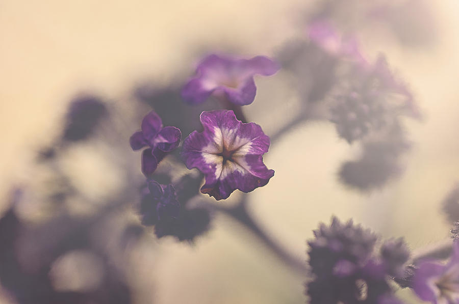 Macro Photograph - Purple Haze by Faith Simbeck
