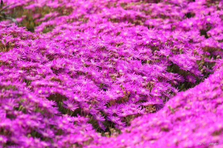 Purple Hills Photograph