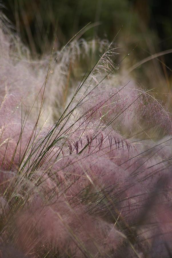 Purple Photograph - Purple In Bloom by Patricia Twardzik