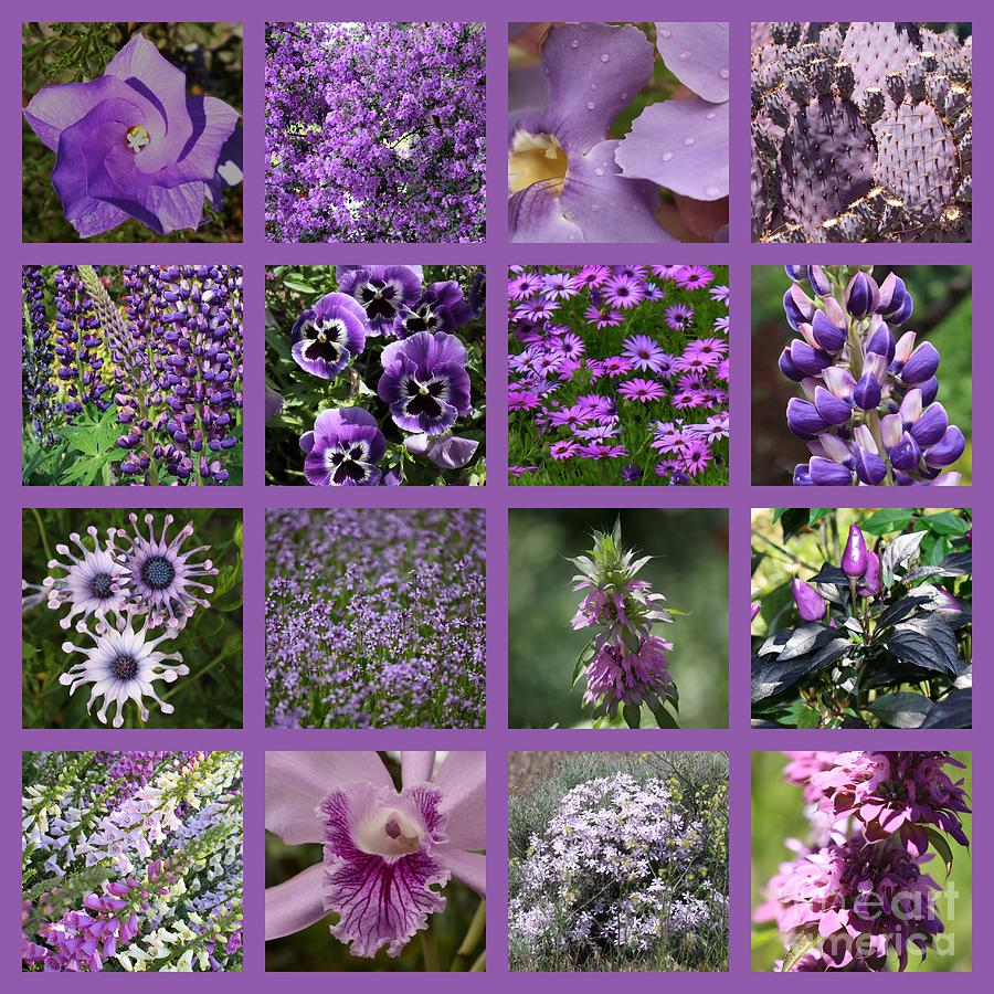 Purple Photograph - Purple In Nature Collage by Carol Groenen