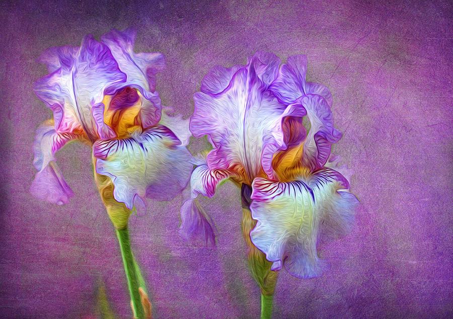 Iris Photograph - Purple Iris by Lena Auxier