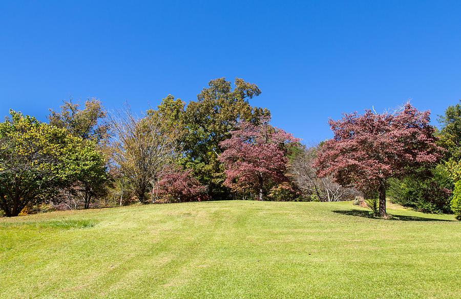 Landscape Photograph - Purple Leaves by John M Bailey