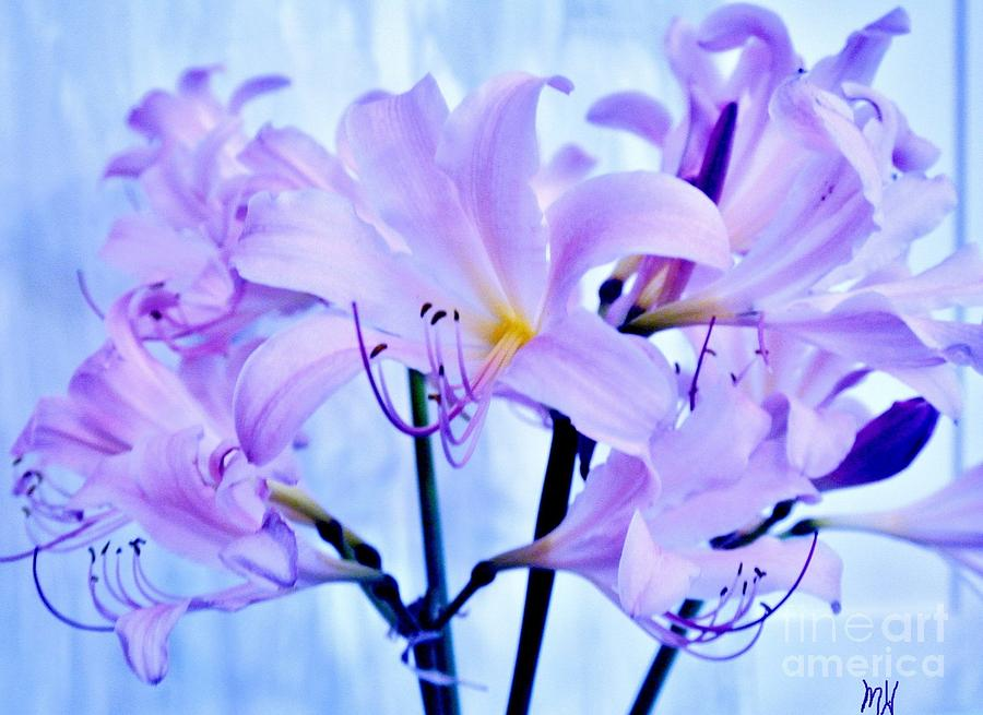 Photo Photograph - Purple Lily Bouquet by Marsha Heiken