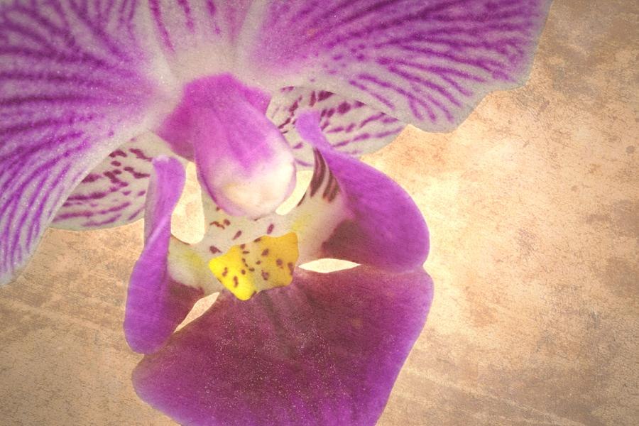 Orchid Photograph - Purple Orchid 1 by Rudy Umans