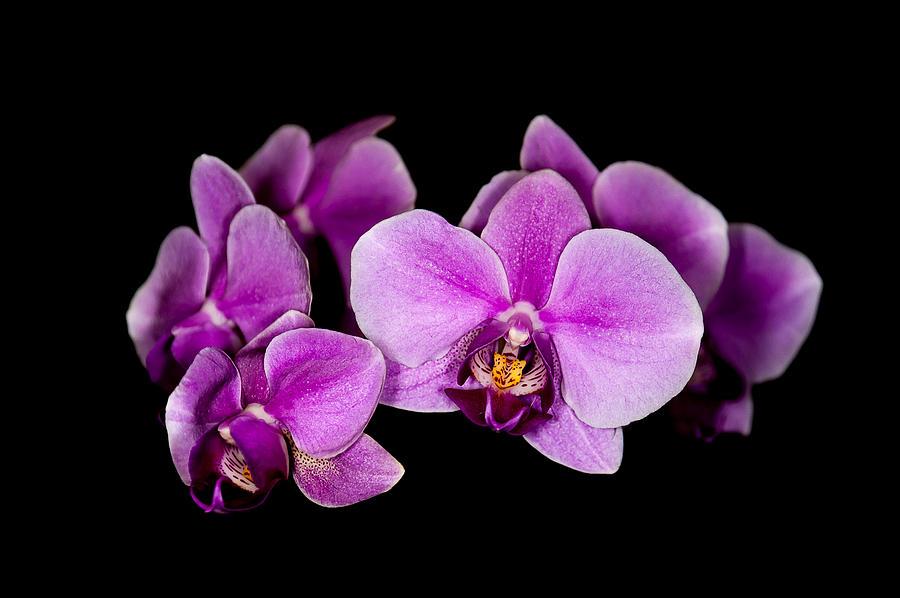 purple orchids by Len Romanick