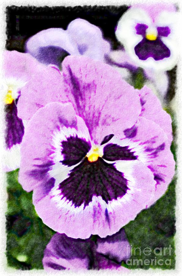 Pansy Photograph - Purple Pansy Close Up - Digital Paint by Debbie Portwood