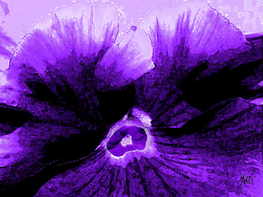 Purple Pansy Rising Photograph