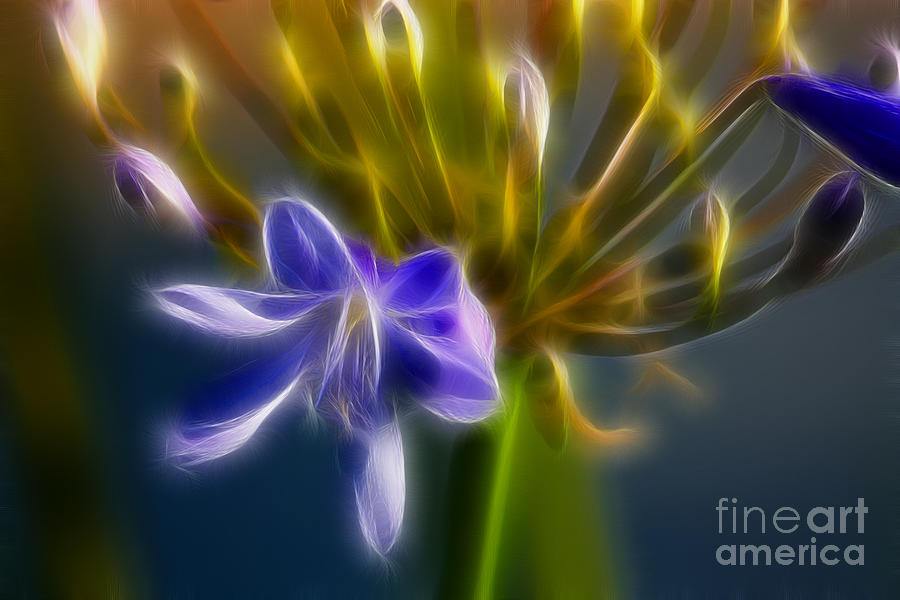 Flower Photograph - Purple Passion 6318-fractal by Gary Gingrich Galleries