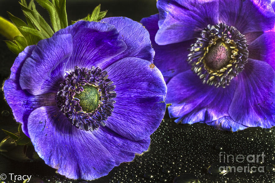 Purple Photograph - Purple Passion by Tracy  Hall