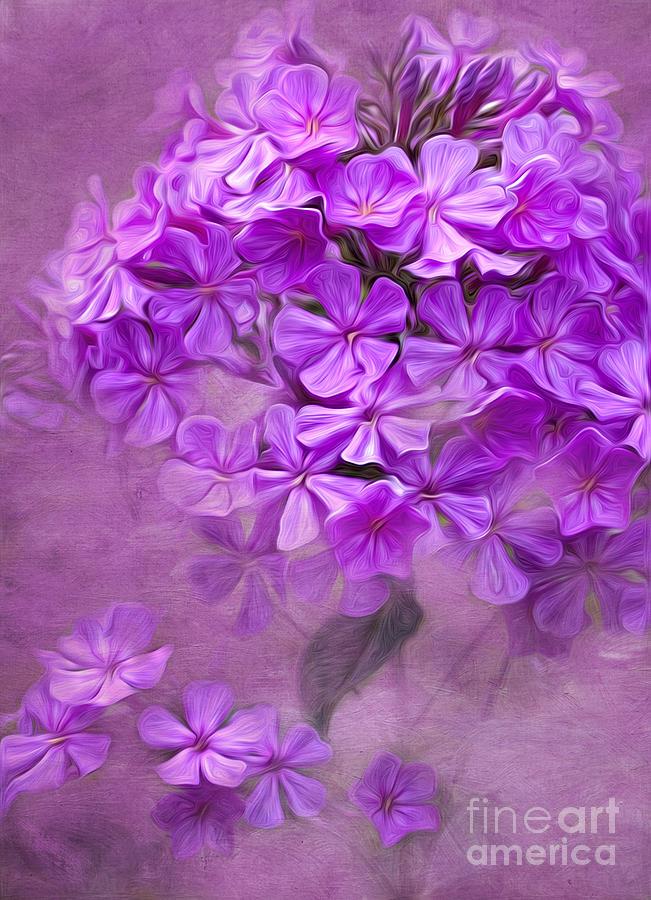 Digital Photograph - Purple Phlox by Lena Auxier
