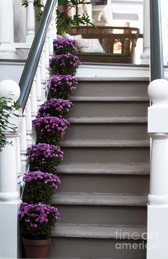 Steps Photograph - Purple Plants by John Rizzuto