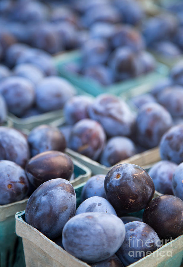 Plums Photograph - Purple Plums by Rebecca Cozart