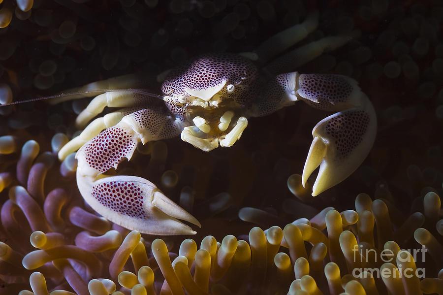 One Photograph - Purple Pocelain by Soren Egeberg