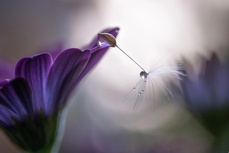 Macro Photograph - Purple Rain by Silvia Spedicato