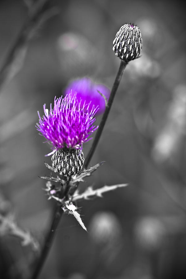 Selective Color Photograph - Purple by Samantha Eisenhauer