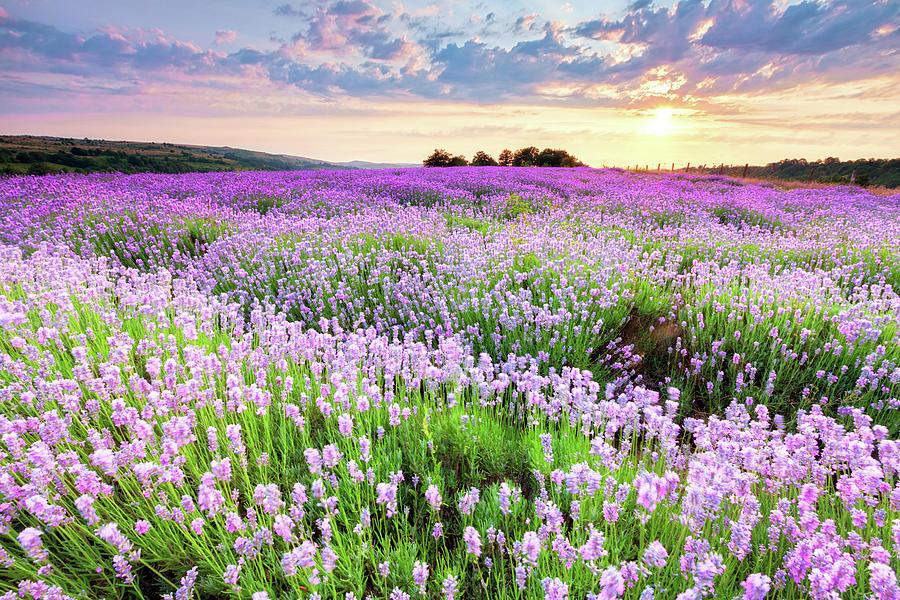 Purple Sea Photograph by Evgeni Dinev Photography