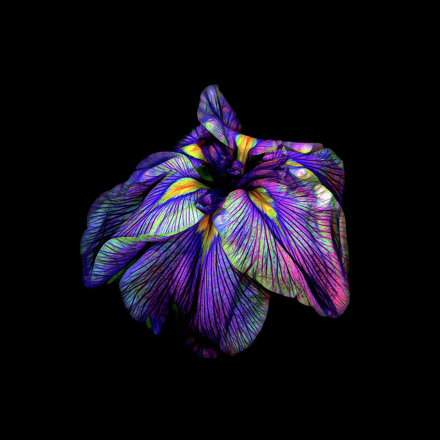 776070a4a260 Purple Siberian Iris Neon Abstract Photograph by David Gn Photography
