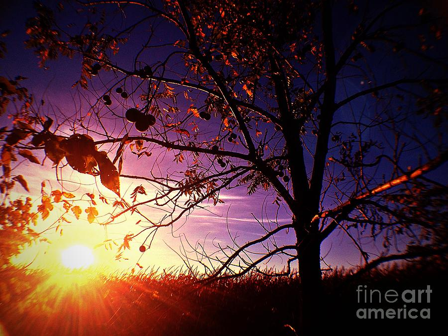 Walnut Tree Photograph - Purple Skies And Walnut Trees by Garren Zanker
