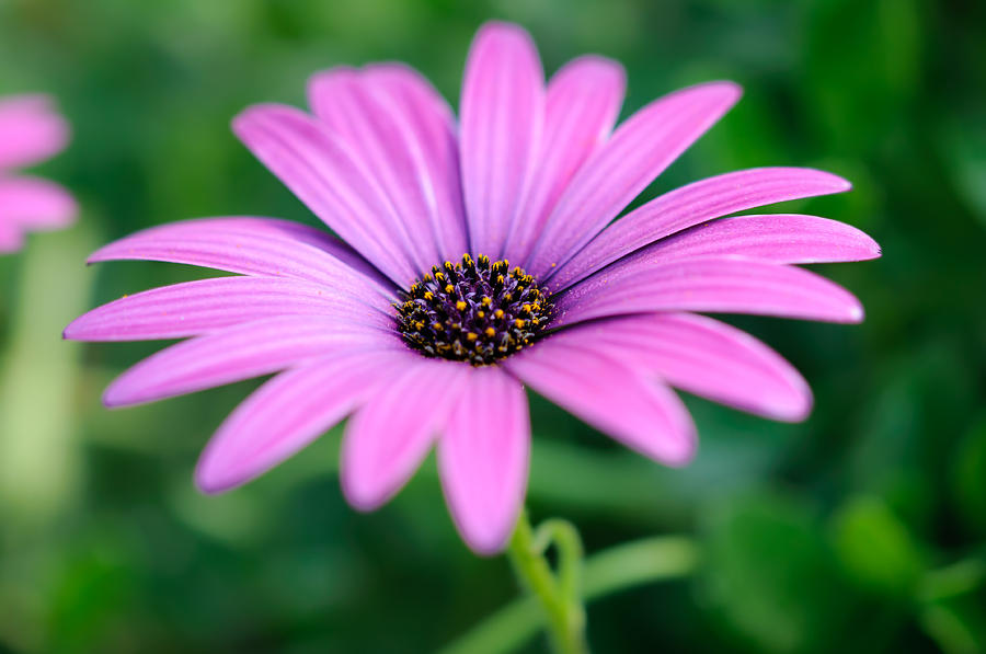 Flower Photograph - Purple Smile by Ivelin Donchev